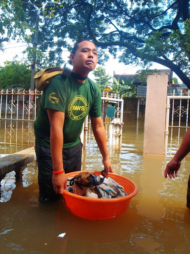 PAWS-volunteers-used-washbasins-and-styro-foams-as-impromptu-rescue-floaters-for-the-dogs-extracted-from-flooded-houses-in-Cain-jpg_085543 - About THE PHILIPPINE ANIMAL WELFARE SOCIETY - Directory Philippines