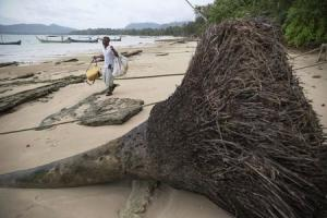 Hong Klathalay carries gear to his fishing boat as he walks past a tree brought down by the 2004 tsunami in Khao Lak