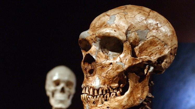 Fossils of Neanderthal DNA clump in human genome