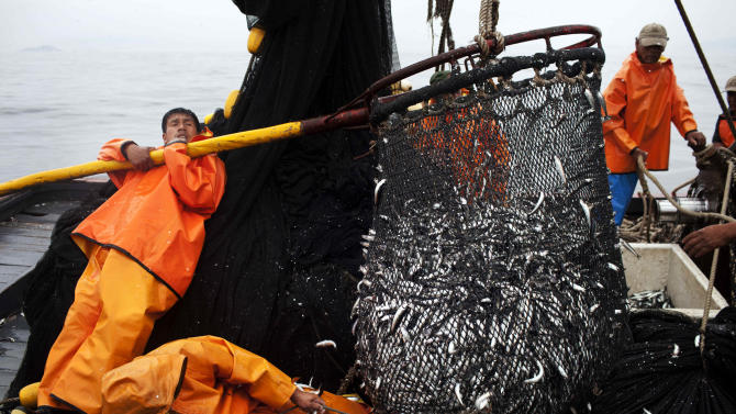 FILE - In this Nov. 22, 2012 photo, fishermen work to unload a net full of anchovies during a fishing expedition in the Pacific Ocean, off the coast of El Callao, Peru. Peru's government ordered radical restrictions on what the country's 1,200-boat commercial fleet could catch, especially after stocks of the Peruvian anchovy, or anchoveta, plummeted last year. But compliance with strict government quotas has been problematic. (AP Photo/Rodrigo Abd, File)