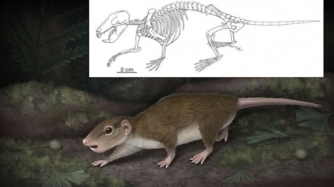 Earliest Remains of Jurassic Rat Relative Found in Chinese Hillside