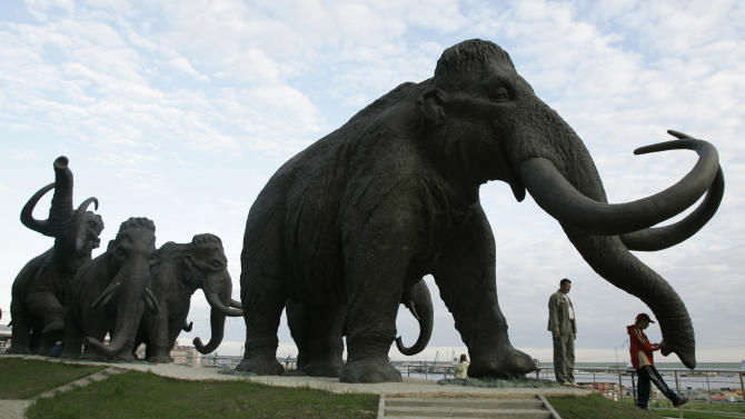 FILE - In this June 28, 2008 file photo a sculpture of mammoths is seen in the Siberian town of Khanty-Mansiisk, 2000 kilometers (1250 miles) east of Moscow, Russia. A Russian university said Tuesday that an international team of scientists have discovered well-preserved frozen woolly mammoth fragments deep in Siberia that may contain living cells, edging a step closer to the possibility of cloning the prehistoric animal. (AP Photo/Dmitry Lovetsky,File)