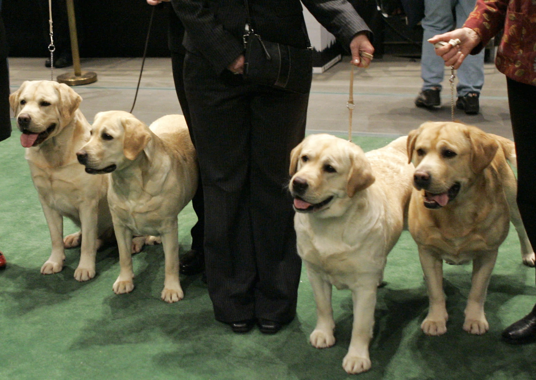 Labs extend record as US top dog, but bulldogs make waves