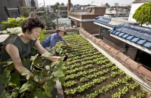 Urban farms give city folk 'food sovereignty'