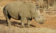 Princes Call For Wildlife Trafficking Ban