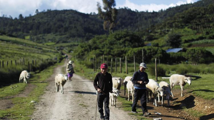 Two boys lead their sheep as they graze along the road to San Jose Las Flores, Chiantla, in the northern Guatemalan region of Huehuetenango