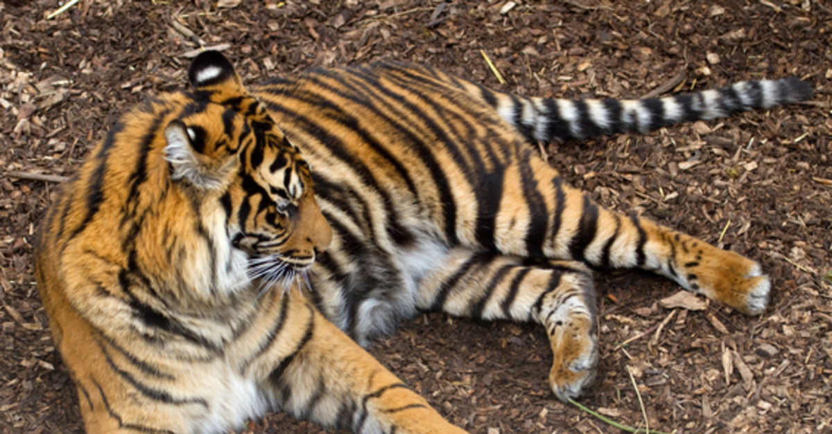 13 Incredible Animals On the Verge Of Extinction