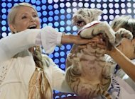 Tigre donata a Yulia Tymoshenko d alla luce 4 cuccioli, uno  albino