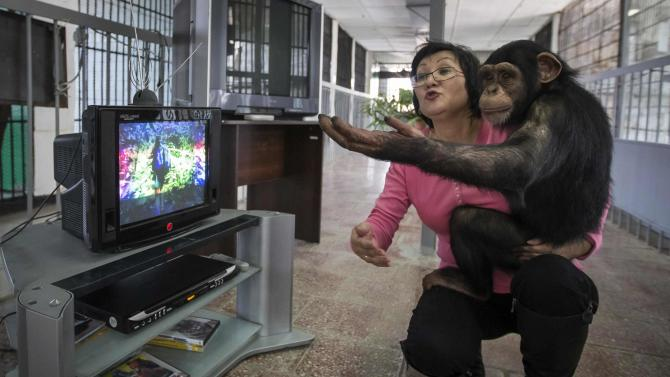 Zoo staff Sholpan Abdibekova and Tomiris, a five-year-old chimpanzee, watch BBC environmental programme in primate winter enclosure in Almaty