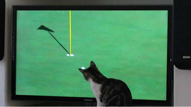 5. Golf Loving Kitty