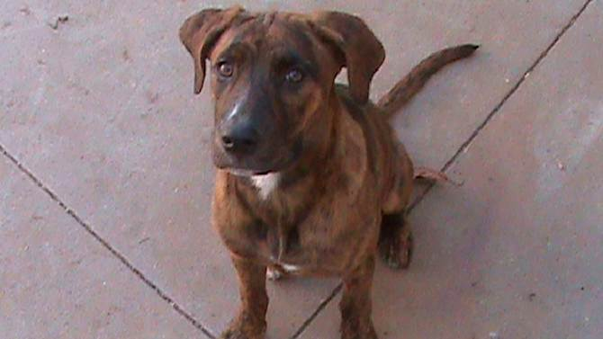Dog missing after running out of Petco event