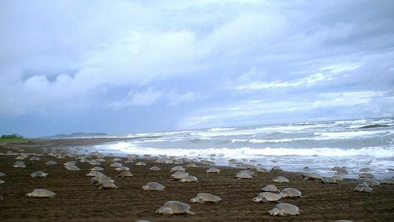 Costa Rica Has a Sea Turtle Egg-Poaching Problem