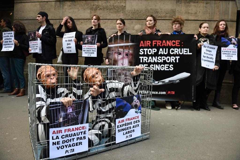 Air France to continue transporting lab monkeys