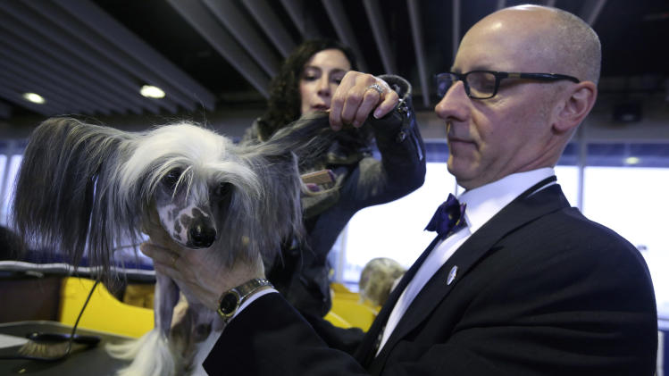Karen Spinazzola, background, and David Bowen, of Cleveland, Ohio, groom Vinny, a Chinese Crested during the 137th Westminster Kennel Club dog show, Monday, Feb. 11, 2013 in New York.  (AP Photo/Mary Altaffer)