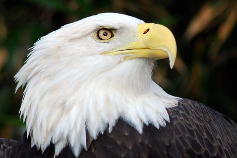 3 Best National Parks for Bald Eagle Encounters
