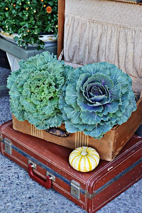 Cabbage and Kale Filled Suitcases