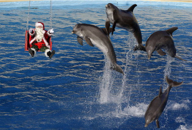 Dolphins jump near a man dressed as Santa Claus at the Marineland Aquatic Park in Antibes