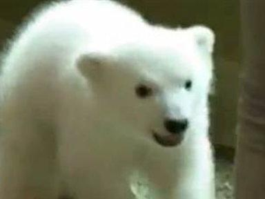 Sooo Cute! Luna the Polar Bear Makes Fluffy Debut