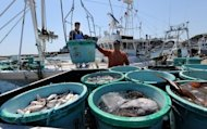 File photo of fishermen unloading their catch at the Hirakata fish market in Kitaibaraki, south of the stricken Fukushima nuclear power plant. About 40% of fish caught near Fukushima are considered unfit for consumption under Japanese regulations