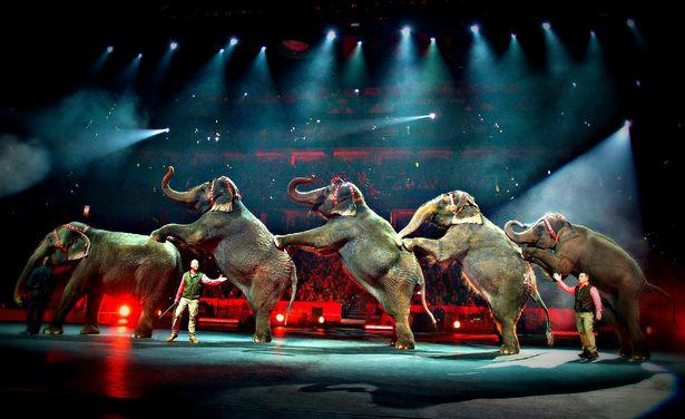 Trunk Show: A Circus Without Elephants