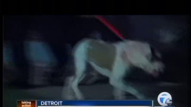 Pit Bull kills baby in Detroit home