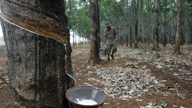 A farmer collects latex at a rubber plantation in Buon Ma Thuot City
