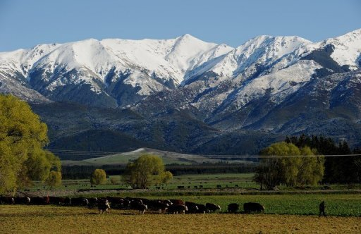 <p>File photo of a farmer leading cows across a field in front of snow capped mountains near Hanmer Springs on New Zealand's South Island. Agricultural subsidies around the world are a waste of hundreds of billions of dollars and unaffordable in the wake of the global financial crisis, New Zealand's prime minister said Friday.</p>