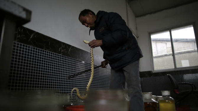 In this Jan. 29, 2013 photo, snake farm worker Zhu Liangfa prepares for the snake wine at the Snake Culture Museum in Zisiqiao village, Zhejiang Province,  China, known as China's first snake village  where raising more than 3 million snakes a year and they are used for traditional medicinal products and food. According to the twelve signs of the Chinese zodiac, the year 2013 marks the year of the snake. (AP Photo/Eugene Hoshiko)