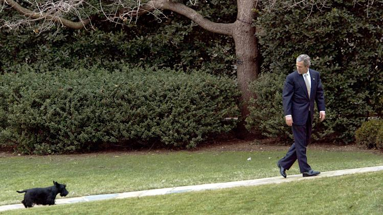 FILE - In this Feb. 3, 2003 file photo, President Bush slows his pace to wait for his dog Barney as he walks to the Oval Office at the White House in Washington, Monday, Feb. 3, 2003. Barney, former White House Scottish Terrier and star of holiday videos shot during President George W. Bush's administration, has died after suffering from cancer, the former president announced in a statement Friday, Feb. 1, 2013. He was 12. (AP Photo/J. Scott Applewhite, File)