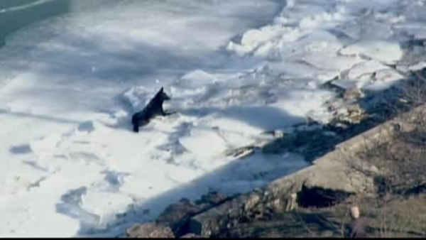 Dog in Chicago gets stuck on ice