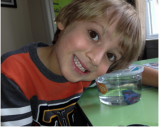Confession time: I killed my son's fish
