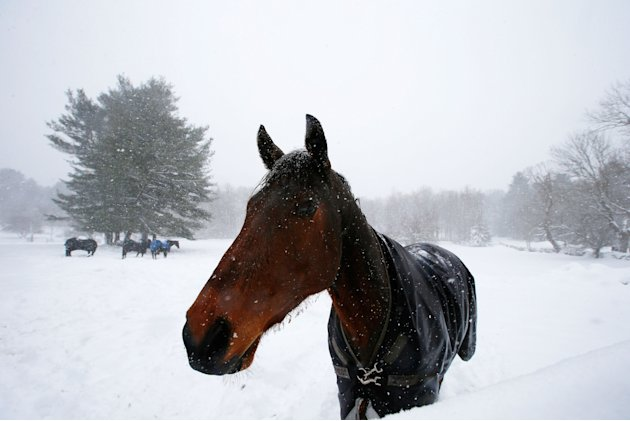 A horse stands in a snow-covered field in Dover