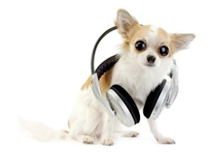 What would your pet like to listen to?