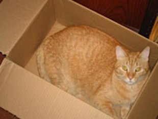 Hey, Jim. Yeah, I'm not going to make it in — I'm, uh, trapped in a box again. With the hiccups. Yes! That's it. Trapped in a box with hiccups. Hep!
