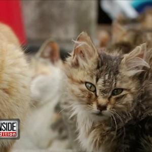 An Island with More Cats than Humans!