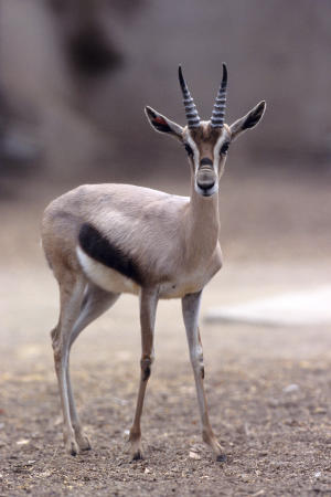 2 zoos, 1 big breeding ground for antelope, birds