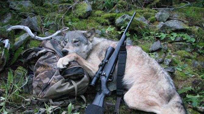 This Sept. 1, 2009 file photo provided by Robert Millage shows his rifle with a wolf he shot on the first day of wolf hunting season along the Lochsa River in Northern Idaho. A temporary court order in Oregon has barred wildlife authorities from killing wolves that attack livestock for the past year. While Oregon has seen wolf attacks on livestock remain static while wolf numbers has risen to 46, Idaho last year saw the numbers of livestock attacks rise dramatically as hunters and wildlife agents killed 422 wolves. Wolf advocates hope tha ccidental experiment will lead other states to reconsider lethal controls as wolves spread through the West. (AP Photo/Robert Millage)