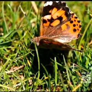 Ban On Releasing Butterflies Up For Debate In San Francisco