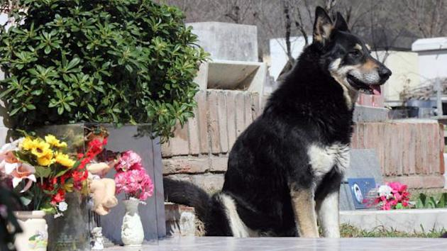 Dog stands guard over owner's grave