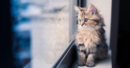 5 DIY Projects to Keep Your Indoor Cat Happy and Healthy