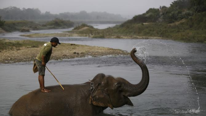 A mahout bathes his elephant at Rapti River before the Elephant Festival at Sauraha in Chitwan