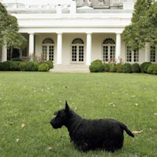Barney the dog in front of the White House