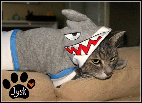 3. Cat Shark