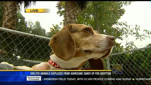 Shelter animals displaced from Hurricane Sandy up for adoption