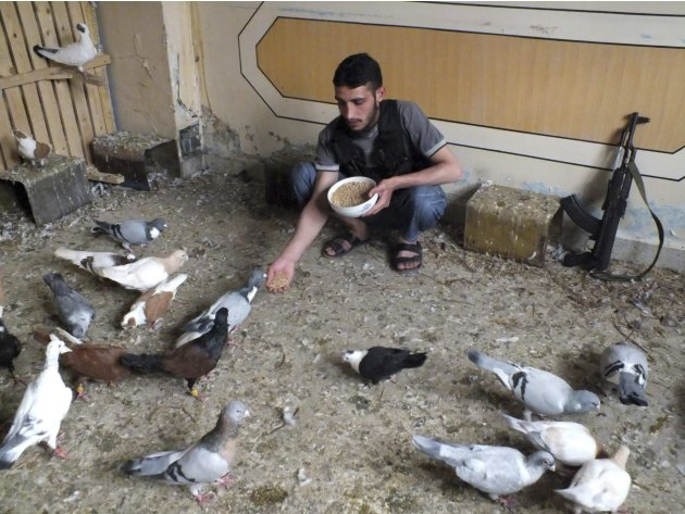 A Free Syrian Army fighter feeds pigeons in Homs