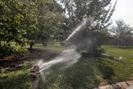 In this Thursday, Aug. 2, 2012 photo, pear trees get emergency watering at the Chicago Botanic Garden in Glencoe, Ill. Many of the garden's 2.5 million plants have required extra watering during the summer's triple-digit heat. (AP Photo/M. Spencer Green)