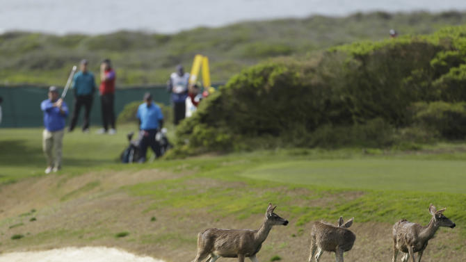 CORRECTS TO PENINSULA-Deer graze as amateur Matthew Sidman hits from the 14th tee of the Monterey Peninsula Country Club Shore Course during the second round of the AT&T Pebble Beach Pro-Am golf tournament  Friday, Feb. 8, 2013, in Pebble Beach, Calif. (AP Photo/Eric Risberg)