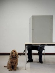 A dog waits while its owner votes in the North Rhine-Westphalia regional elections in Duesseldorf, western Germany. NRW historically plays a big role in federal politics -- in 2005, a lost vote in the state prompted then chancellor Gerhard Schroeder to call a snap federal election which saw Merkel wrest power from him