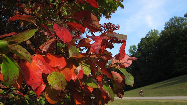 The trees are beginning to change color on Saturday, Sept. 29, 2012, on Natchez Trace Parkway in Williamson County, Tenn. The fall foliage season is expected to be colorful  in much of the Southeast. (AP Photo/Teresa Wasson)