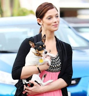 Ashley Greene dog